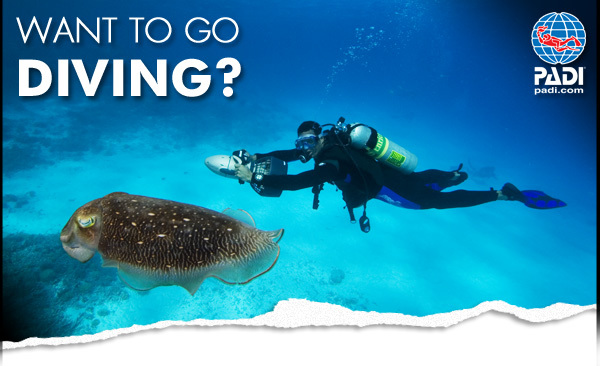 Discover Scuba Diving auf Guadeloupe
