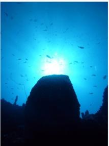 Deep Dive Adventure