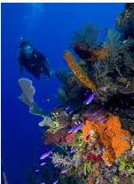 Drift Dive adventure