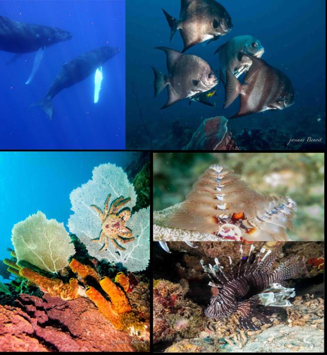Begegnungen im Cousteau Marine Park