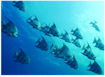 Fische des Cousteau Marine Parks