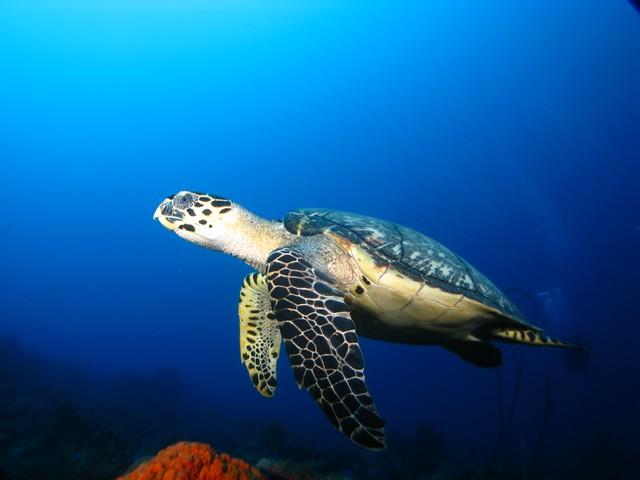 Confinement: quels bienfaits pour la Réserve Cousteau ?