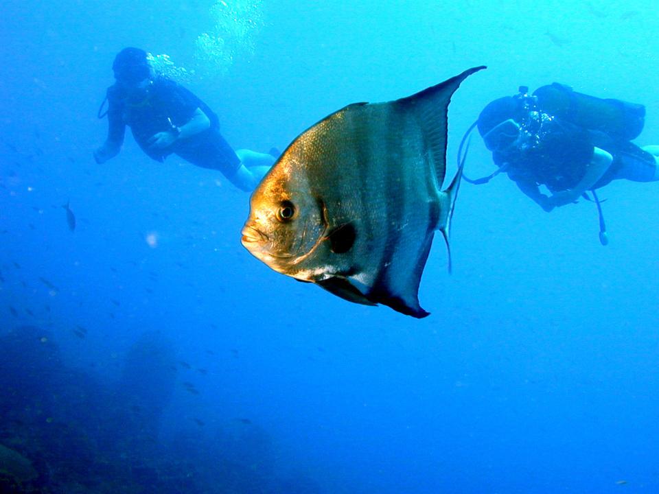 Plongée au Jardin de Corail dans la Réserve Cousteau