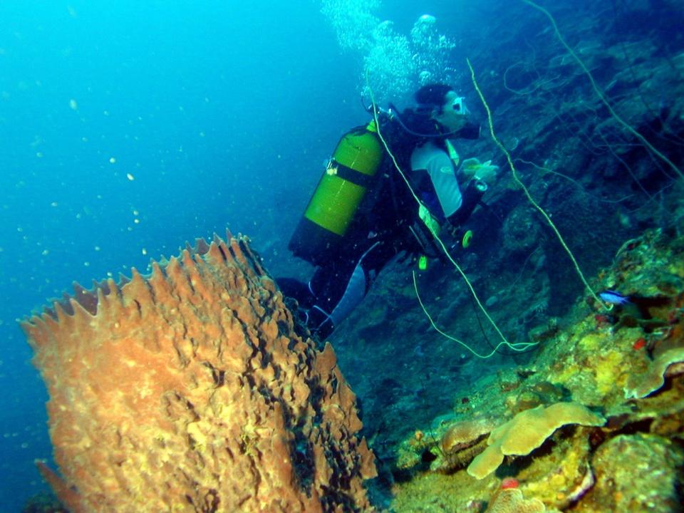 Eponge Barrique Jardin de corail (Netted Barrel Sponge)