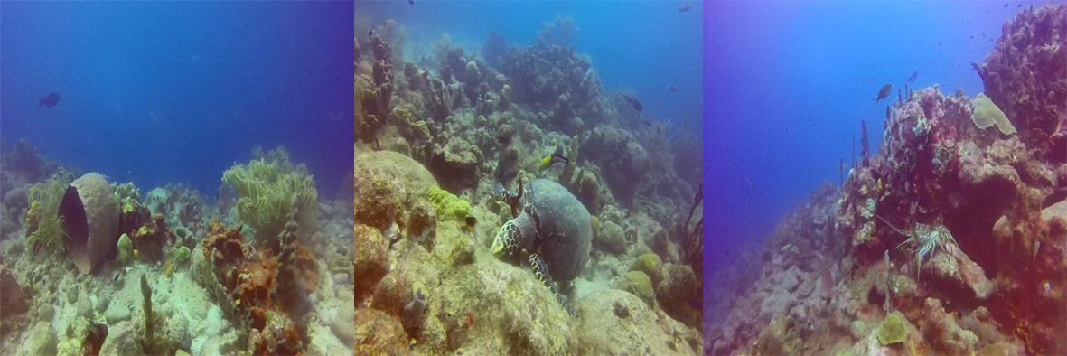 Réserve Cousteau : Aquarium après Maria