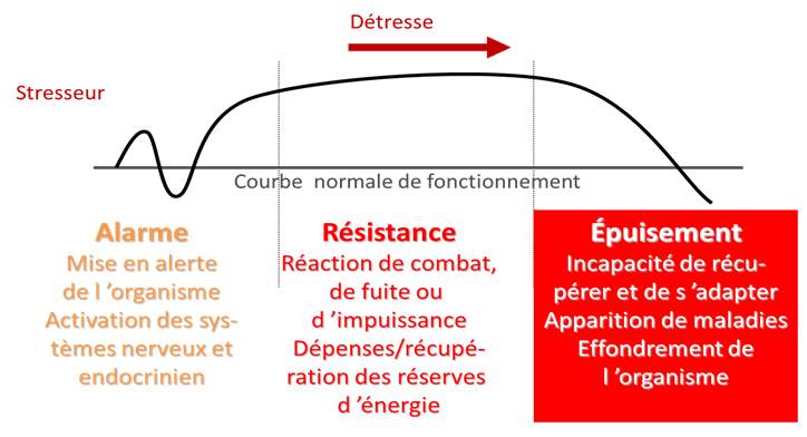 les phases du stress