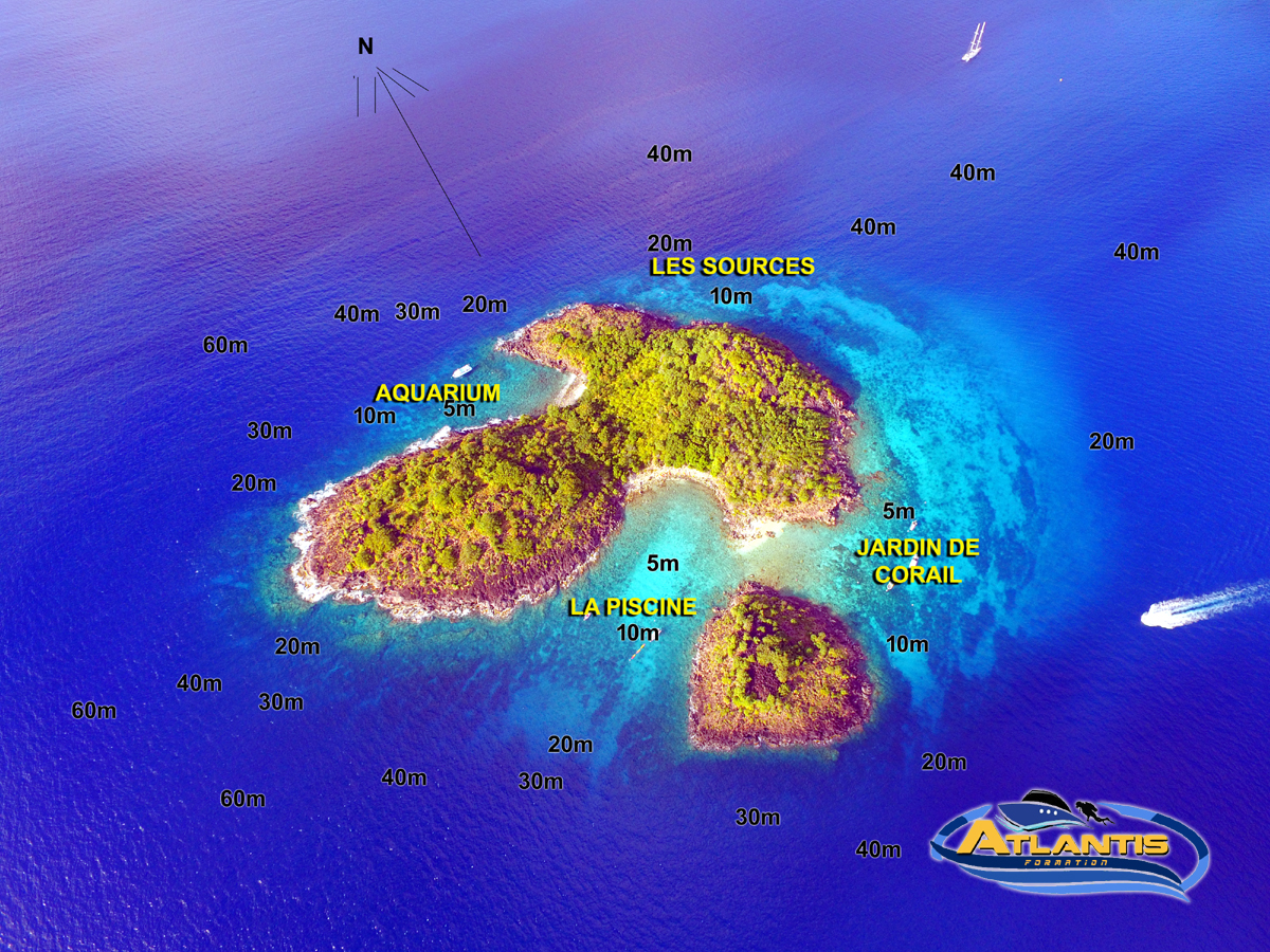Réserve Cousteau Plongée Guadeloupe