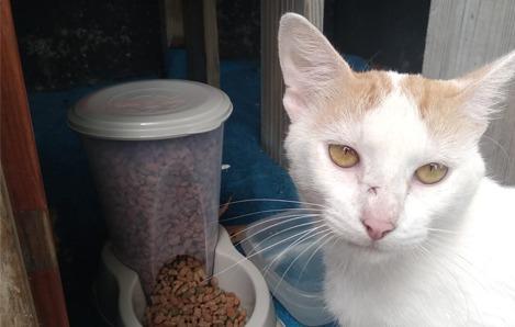 Nouvelle mascotte au club : Foui Foui, le chat d'Atlantis Formation