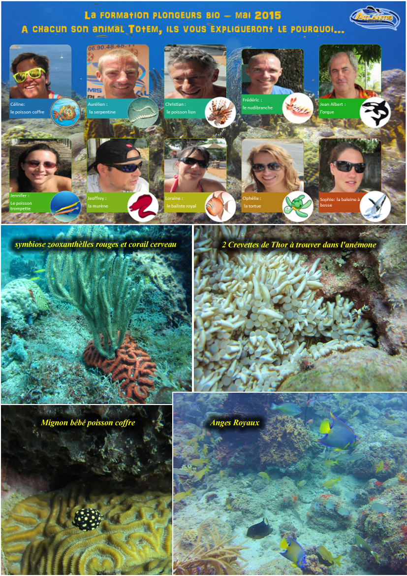 Formation Bio plongée Guadeloupe Atlantis