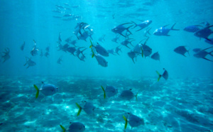Tarifs plongée Guadeloupe