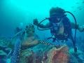 tortue et plongeuse