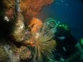 hippocampe et plongeur